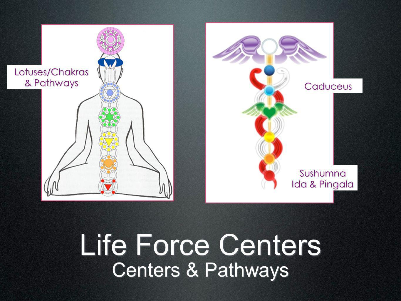 Life Force Centers Centers & Pathways Sushumna Ida & Pingala Lotuses/Chakras & Pathways Caduceus