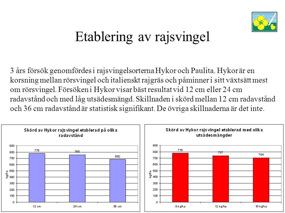 Etablering av rajsvingel 3 års försök genomfördes i rajsvingelsorterna Hykor och Paulita.