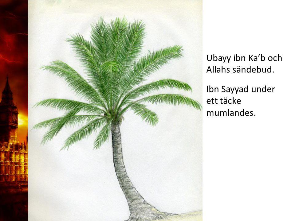 Ubayy ibn Ka'b och Allahs sändebud. Ibn Sayyad under ett täcke mumlandes.