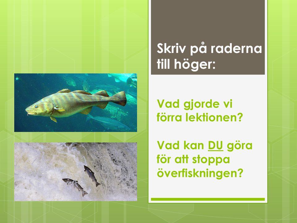Vad gjorde vi förra lektionen? Vad kan DU göra för att stoppa överfiskningen? Skriv på raderna till höger: