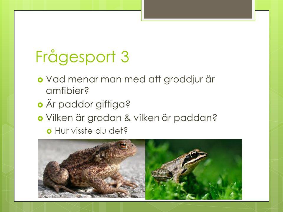 Frågesport 3  Vad menar man med att groddjur är amfibier?  Är paddor giftiga?  Vilken är grodan & vilken är paddan?  Hur visste du det?
