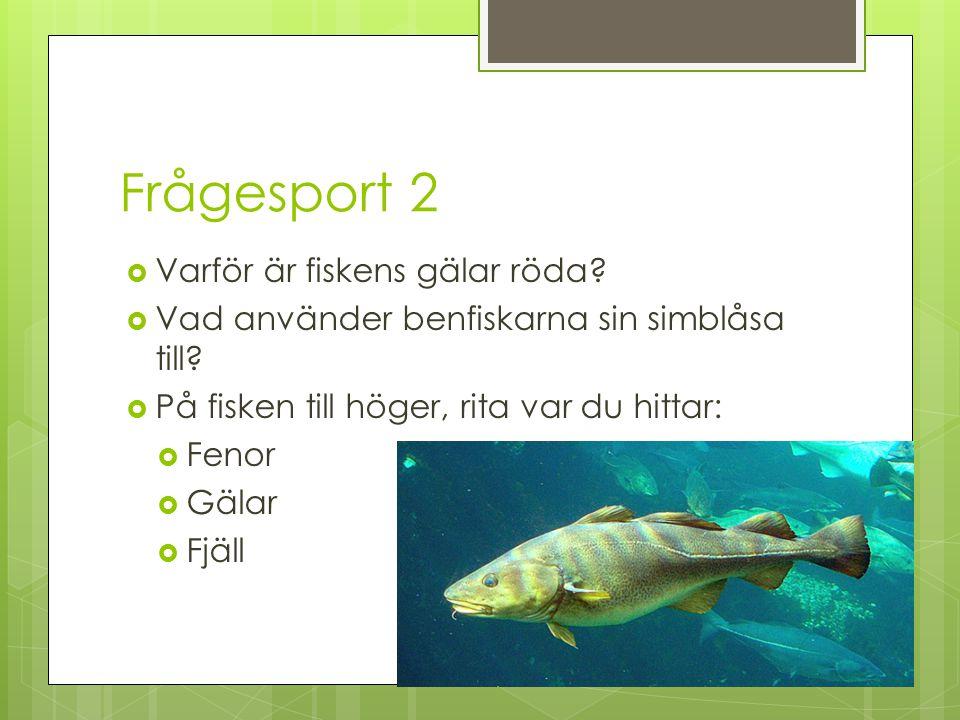Frågesport 2  Varför är fiskens gälar röda?  Vad använder benfiskarna sin simblåsa till?  På fisken till höger, rita var du hittar:  Fenor  Gälar