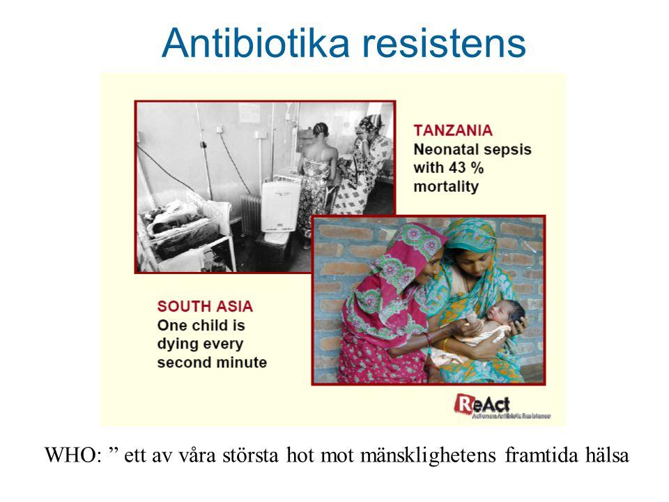 Antibiotika resistens WHO: ett av våra största hot mot mänsklighetens framtida hälsa