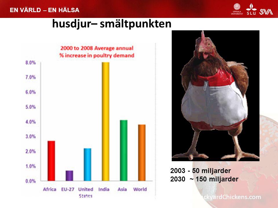 EN VÄRLD – EN HÄLSA TheCityChicken.com, UrbanChickens.org, MadCityChickens.com, BackyardChickens.com husdjur– smältpunkten 2003 - 50 miljarder 2030 ~
