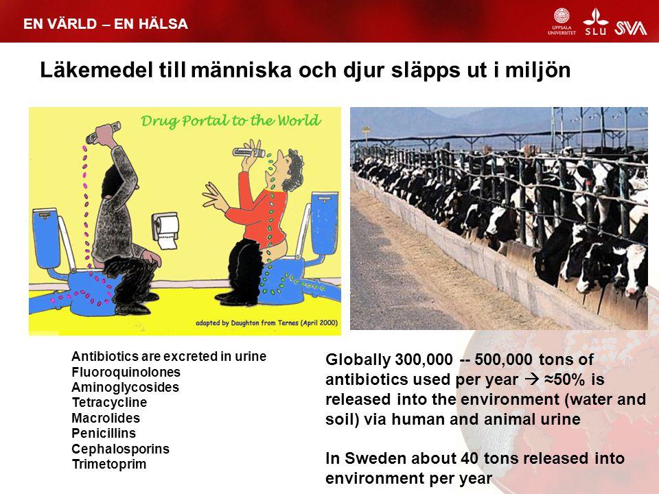 EN VÄRLD – EN HÄLSA Läkemedel till människa och djur släpps ut i miljön Globally 300,000 -- 500,000 tons of antibiotics used per year  ≈50% is releas