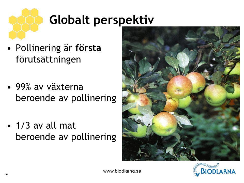 © www.biodlarna.se Globalt perspektiv Pollinering är första förutsättningen 99% av växterna beroende av pollinering 1/3 av all mat beroende av pollinering