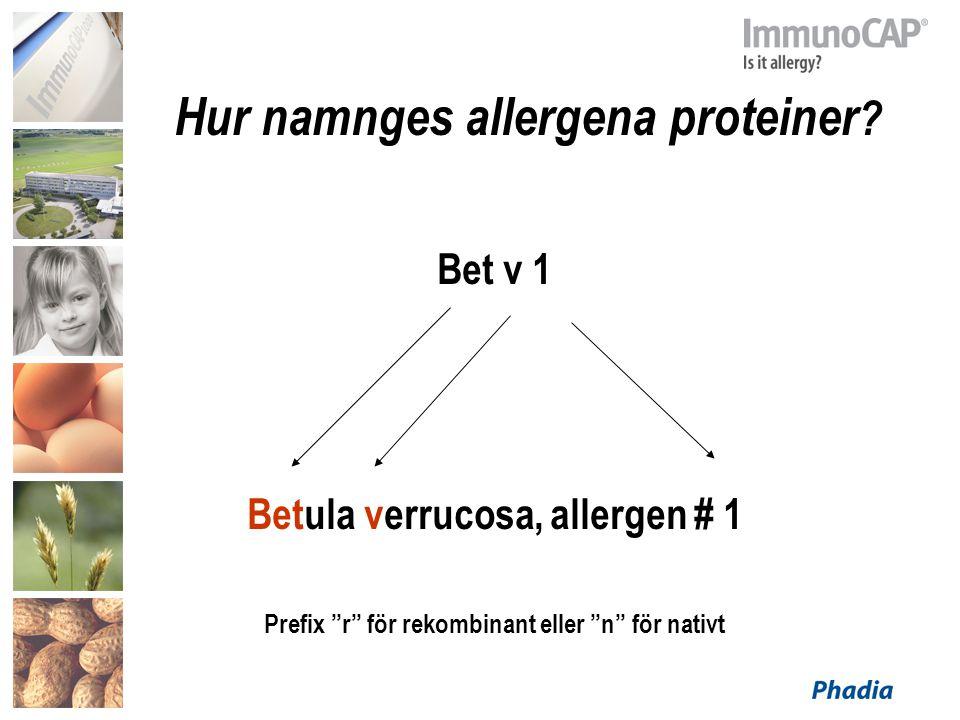 """Hur namnges allergena proteiner ? Bet v 1 Betula verrucosa, allergen # 1 Prefix """"r"""" för rekombinant eller """"n"""" för nativt"""