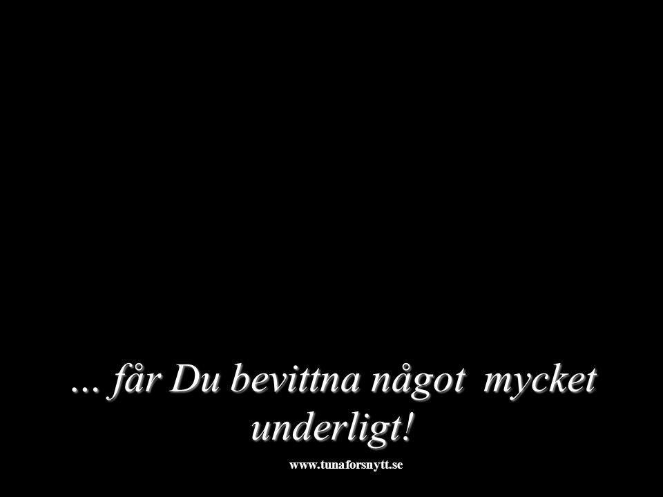 … får Du bevittna något mycket underligt! 2015-01-123http://www.tunaforsnytt.se/