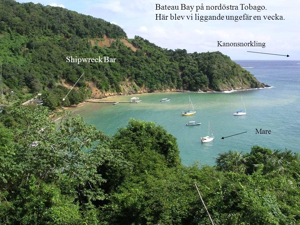 Bateau Bay på nordöstra Tobago. Här blev vi liggande ungefär en vecka. Shipwreck Bar Kanonsnorkling Mare