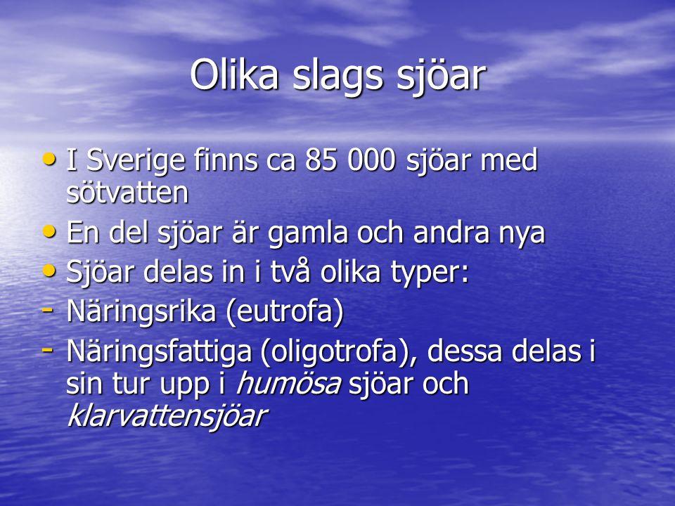 Olika slags sjöar I Sverige finns ca 85 000 sjöar med sötvatten I Sverige finns ca 85 000 sjöar med sötvatten En del sjöar är gamla och andra nya En del sjöar är gamla och andra nya Sjöar delas in i två olika typer: Sjöar delas in i två olika typer: - Näringsrika (eutrofa) - Näringsfattiga (oligotrofa), dessa delas i sin tur upp i humösa sjöar och klarvattensjöar