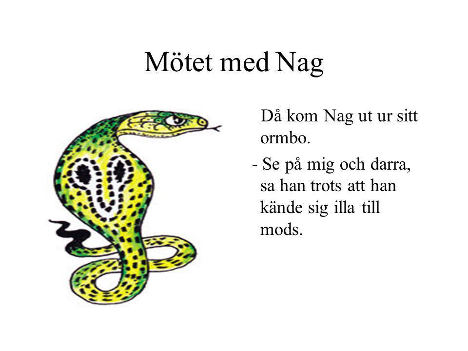 Mötet med Nag Då kom Nag ut ur sitt ormbo.