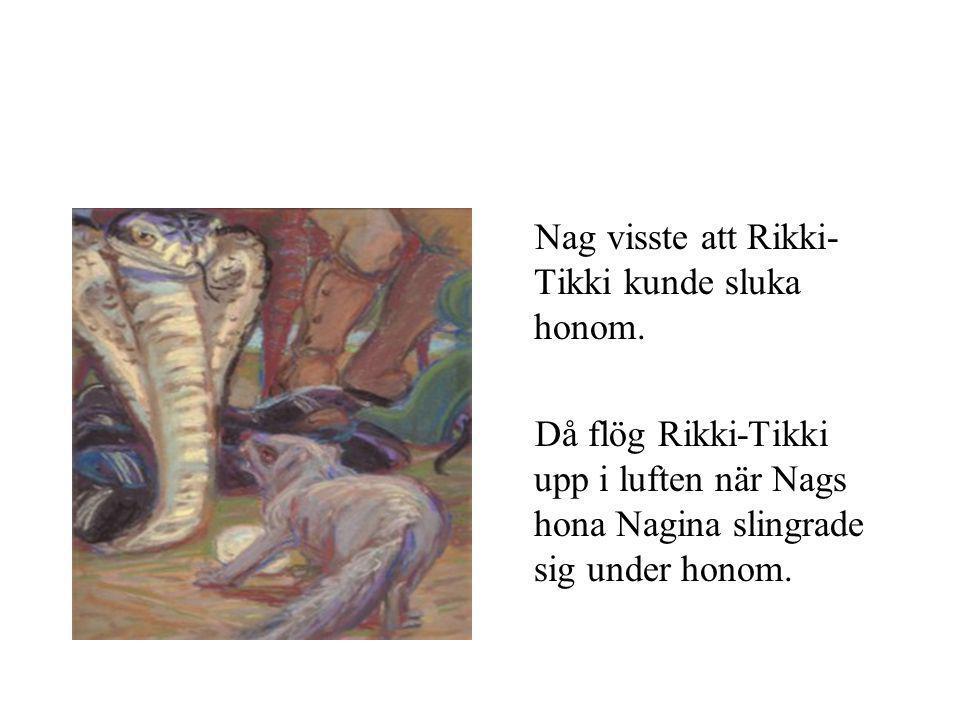 Nag visste att Rikki- Tikki kunde sluka honom.