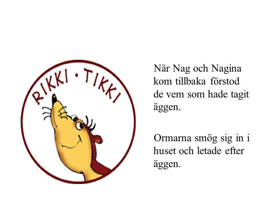 Några dagar senare passade Rikki-Tikki på att smyga ner i Nag och Naginas ormhåla och ta deras ägg.