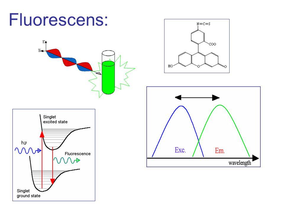 Fluorescens: