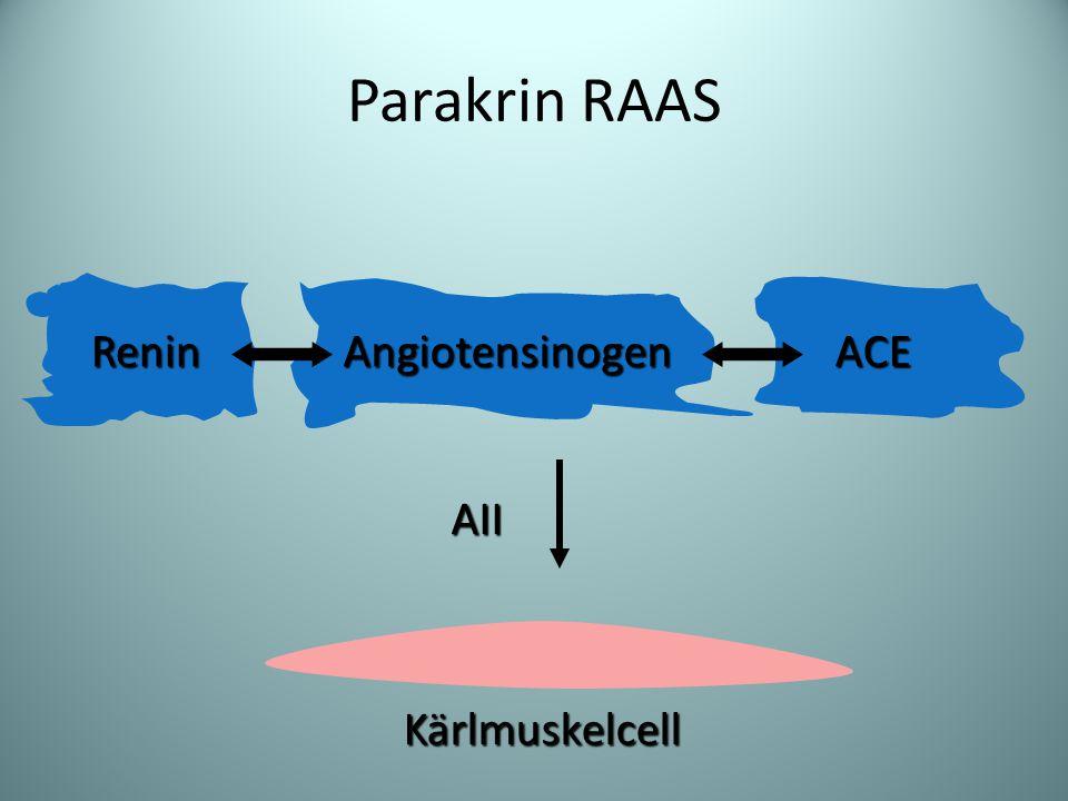 Parakrin RAAS ACEReninAngiotensinogen AII Kärlmuskelcell