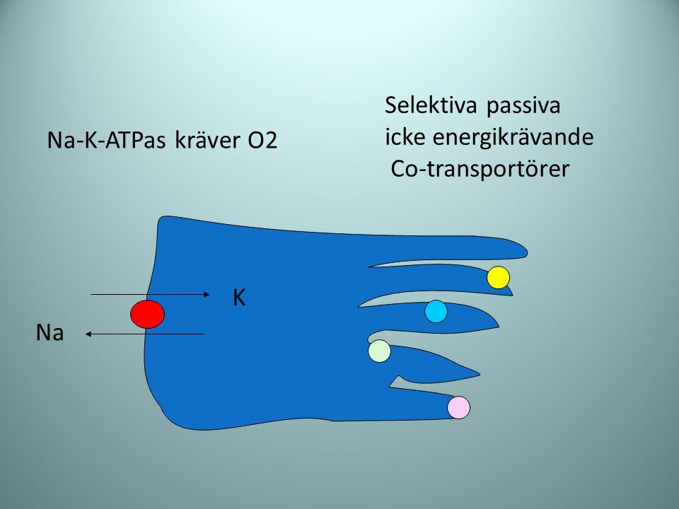 Na K Na-K-ATPas kräver O2 Selektiva passiva icke energikrävande Co-transportörer