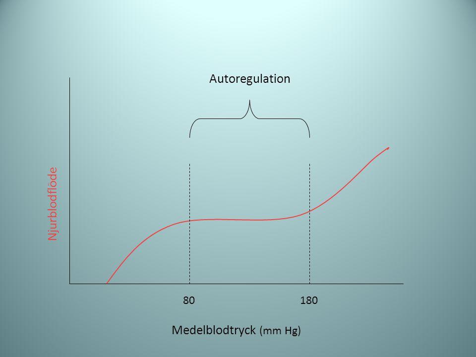 Njurblodflöde Medelblodtryck (mm Hg) 80180 Autoregulation