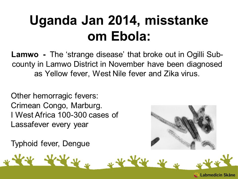 Uganda Jan 2014, misstanke om Ebola: Lamwo - The 'strange disease' that broke out in Ogilli Sub- county in Lamwo District in November have been diagnosed as Yellow fever, West Nile fever and Zika virus.