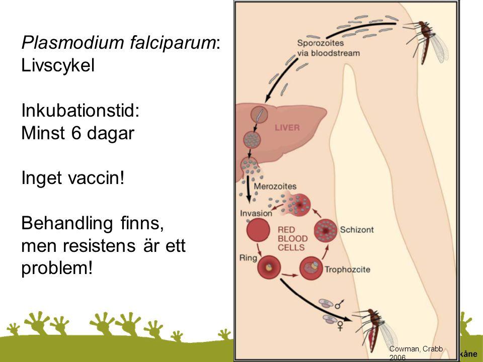 Plasmodium falciparum: Livscykel Inkubationstid: Minst 6 dagar Inget vaccin! Behandling finns, men resistens är ett problem! Cowman, Crabb 2006