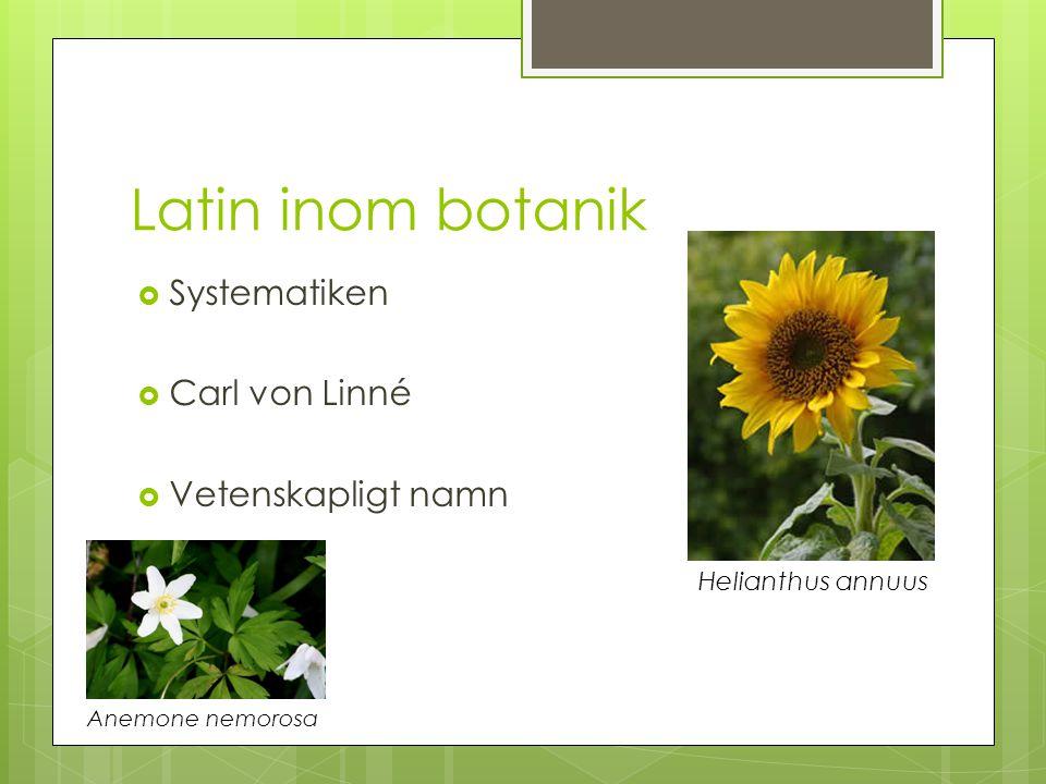 Latin i praktiken  Kommunikation  Fakta  Saknad av svenska namn Ranunculus acris