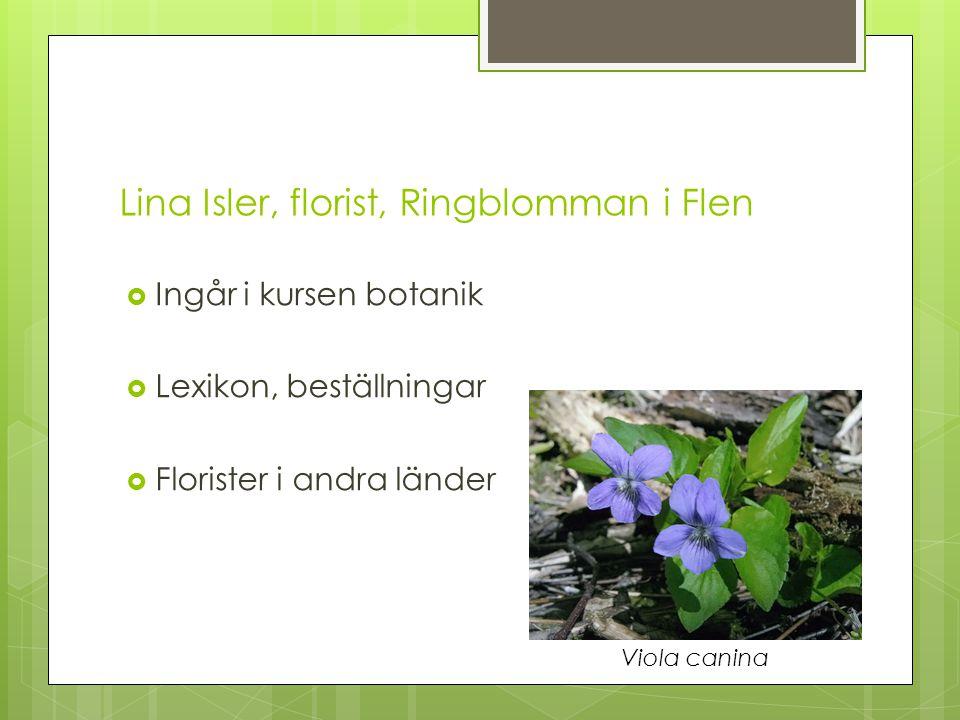 Lina Isler, florist, Ringblomman i Flen  Ingår i kursen botanik  Lexikon, beställningar  Florister i andra länder Viola canina