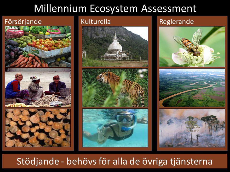 KulturellaFörsörjandeReglerande Millennium Ecosystem Assessment Stödjande - behövs för alla de övriga tjänsterna