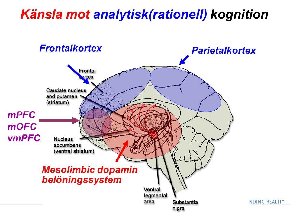 Mesolimbic dopamin belöningssystem Frontalkortex Parietalkortex Känsla mot analytisk(rationell) kognition mPFC mOFC vmPFC