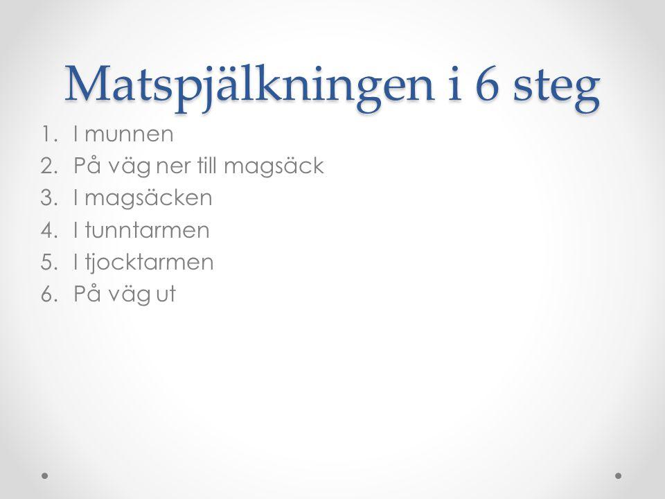 Matspjälkningen i 6 steg 1.I munnen 2.På väg ner till magsäck 3.I magsäcken 4.I tunntarmen 5.I tjocktarmen 6.På väg ut