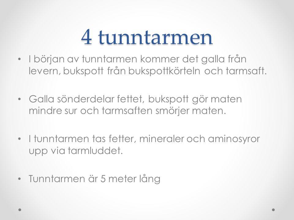 4 tunntarmen I början av tunntarmen kommer det galla från levern, bukspott från bukspottkörteln och tarmsaft. Galla sönderdelar fettet, bukspott gör m