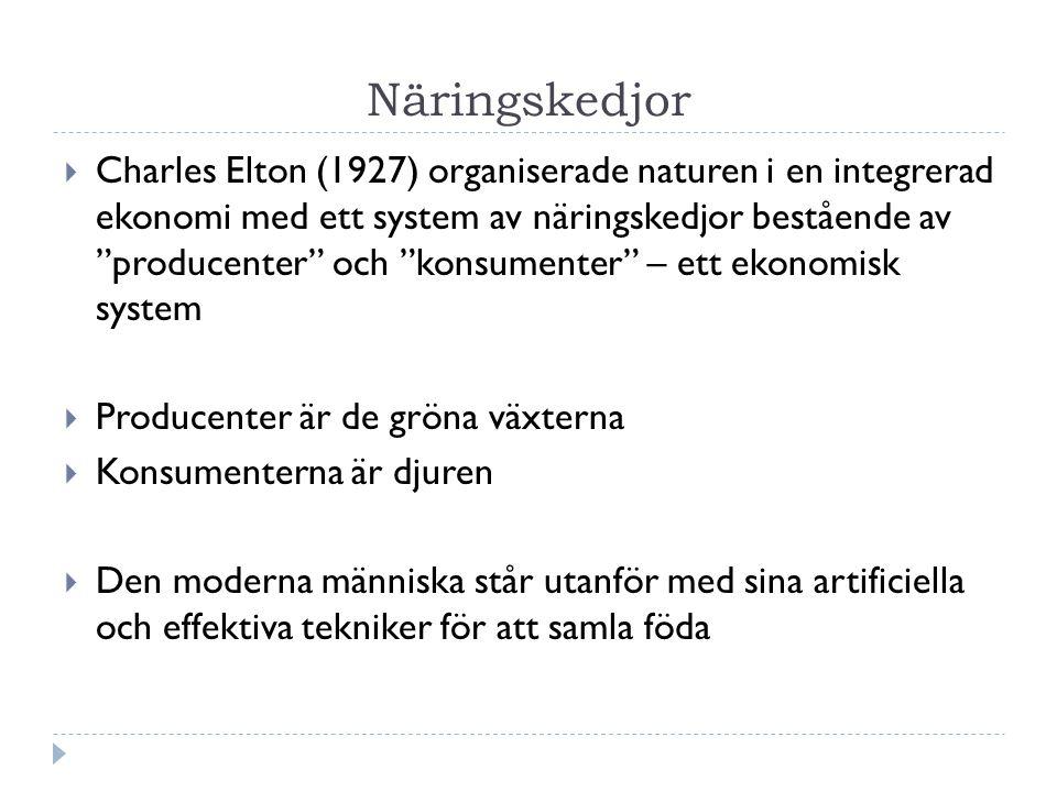 Näringskedjor  Charles Elton (1927) organiserade naturen i en integrerad ekonomi med ett system av näringskedjor bestående av producenter och konsumenter – ett ekonomisk system  Producenter är de gröna växterna  Konsumenterna är djuren  Den moderna människa står utanför med sina artificiella och effektiva tekniker för att samla föda