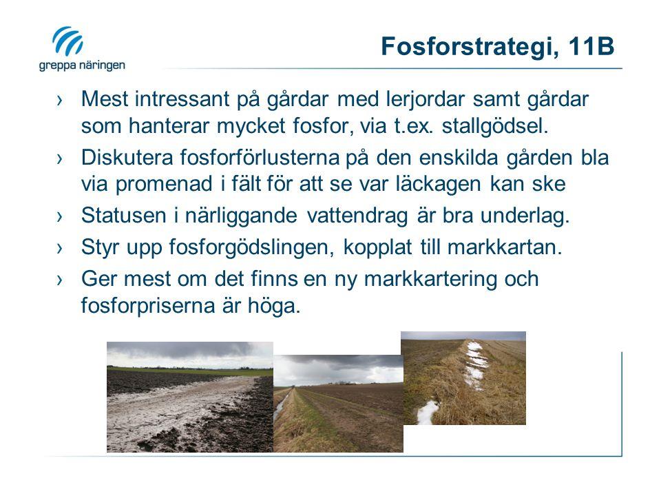 Fosforstrategi, 11B ›Mest intressant på gårdar med lerjordar samt gårdar som hanterar mycket fosfor, via t.ex. stallgödsel. ›Diskutera fosforförluster