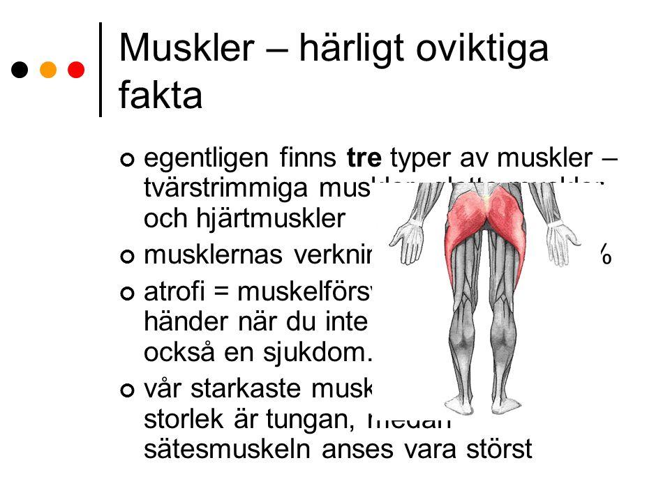 Muskler – härligt oviktiga fakta egentligen finns tre typer av muskler – tvärstrimmiga muskler, glatta muskler och hjärtmuskler musklernas verkningsgr