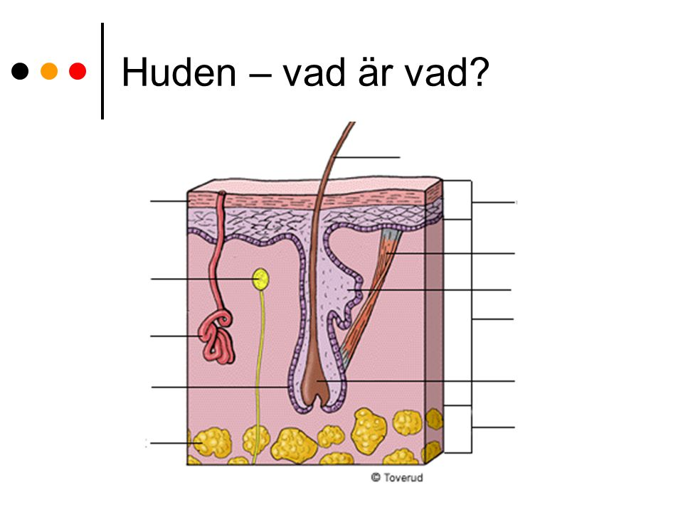 Blodet i praktiken hemoglobinet innehåller järn, vilket ger den röda färgen.