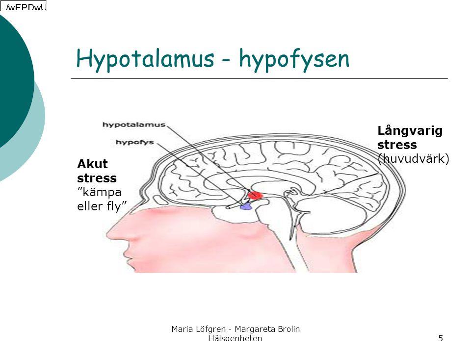 """Maria Löfgren - Margareta Brolin Hälsoenheten5 Hypotalamus - hypofysen Akut stress """"kämpa eller fly"""" Långvarig stress (huvudvärk)"""