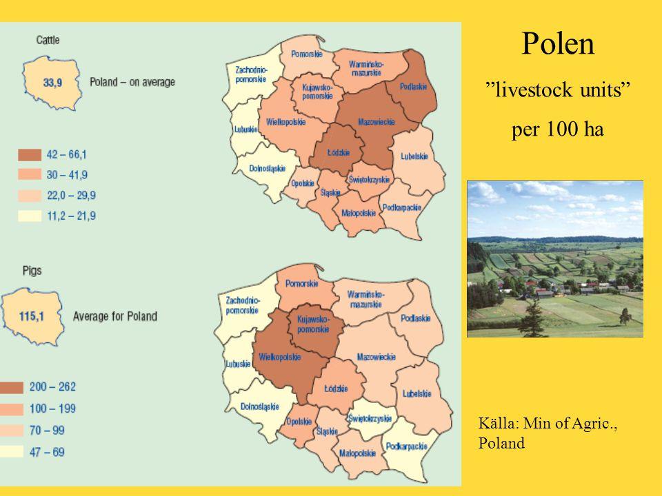 """Polen """"livestock units"""" per 100 ha Källa: Min of Agric., Poland"""