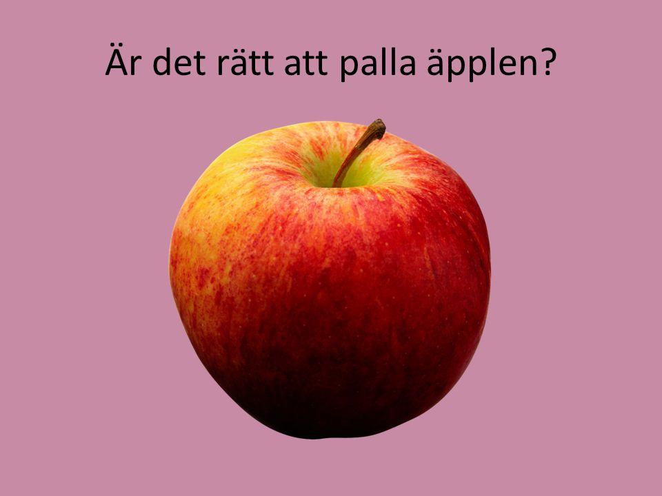 Är det rätt att palla äpplen?