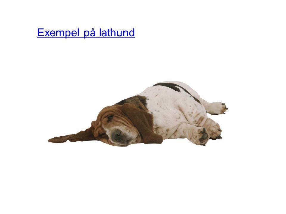 Exempel på lathund