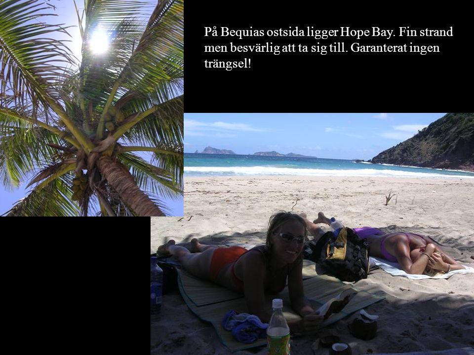 Skvalp.Det finns gott om kokosnötter i Hope Bay.