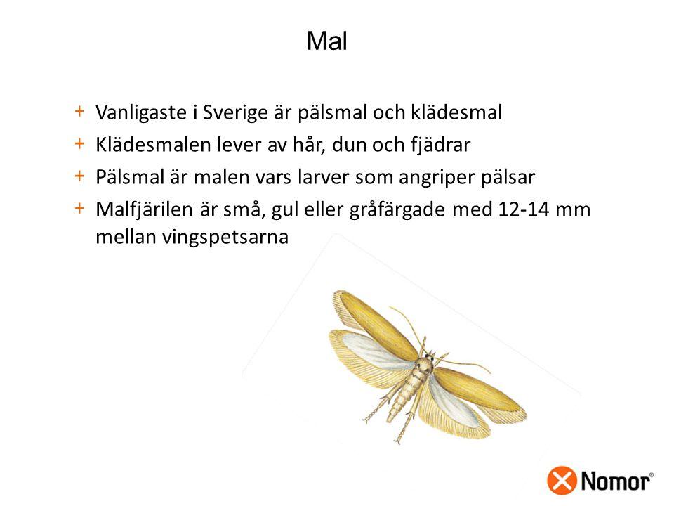 Mal + Vanligaste i Sverige är pälsmal och klädesmal + Klädesmalen lever av hår, dun och fjädrar + Pälsmal är malen vars larver som angriper pälsar + Malfjärilen är små, gul eller gråfärgade med 12-14 mm mellan vingspetsarna
