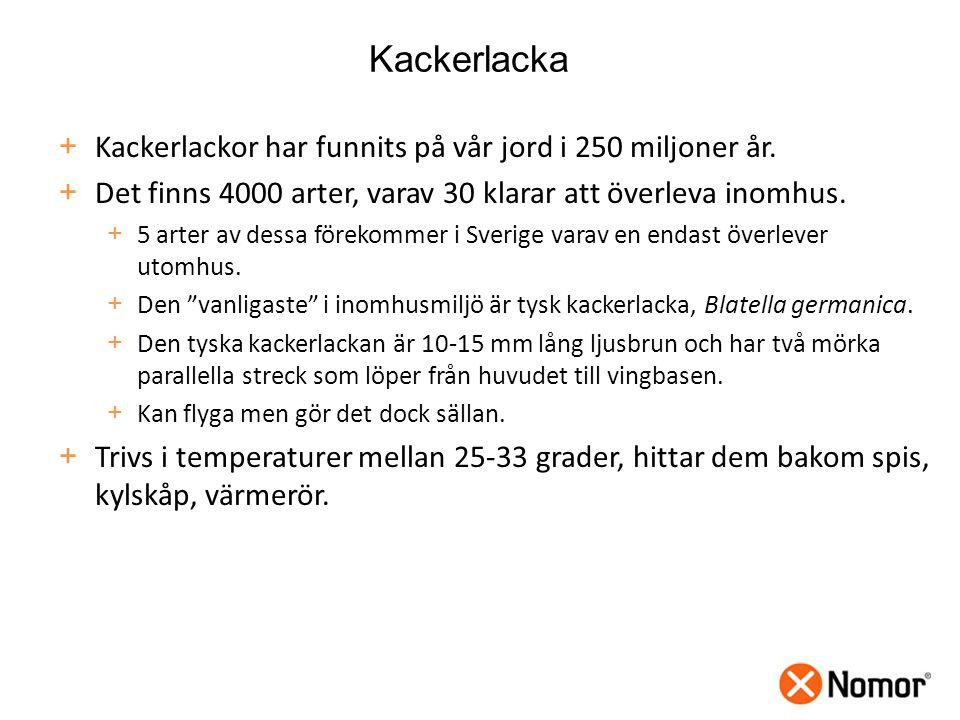 + Kackerlackor har funnits på vår jord i 250 miljoner år.