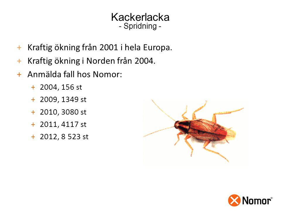 Kackerlacka - Spridning - +Kraftig ökning från 2001 i hela Europa.