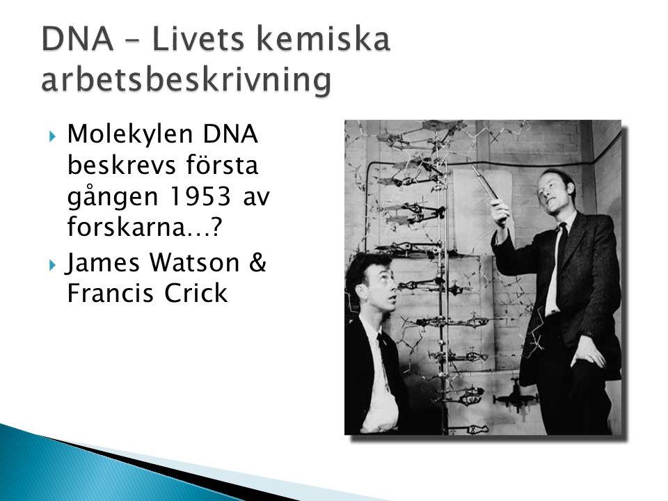  Molekylen DNA beskrevs första gången 1953 av forskarna…?  James Watson & Francis Crick
