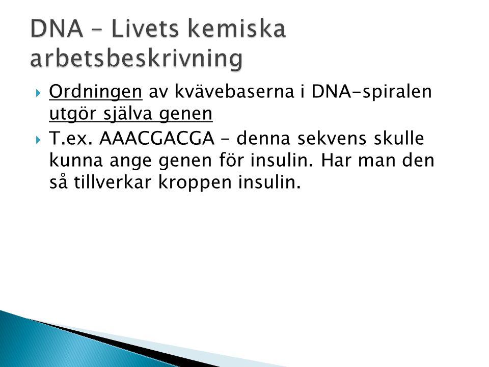  Ordningen av kvävebaserna i DNA-spiralen utgör själva genen  T.ex. AAACGACGA - denna sekvens skulle kunna ange genen för insulin. Har man den så ti