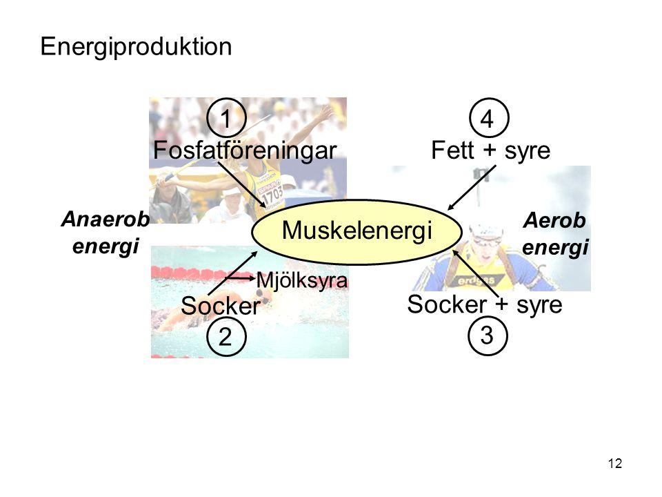 12 1 Fosfatföreningar Socker 2 Socker + syre 3 4 Fett + syre Muskelenergi Mjölksyra Anaerob energi Aerob energi Energiproduktion