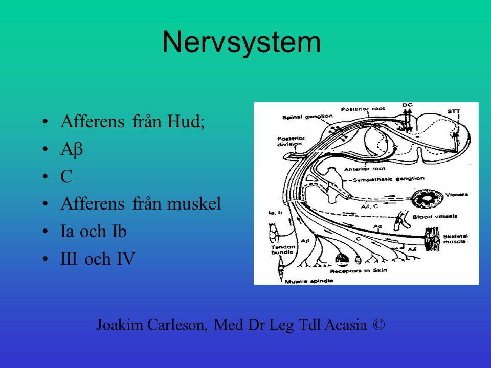 Nervsystem Afferens från Hud; A  C Afferens från muskel Ia och Ib III och IV Joakim Carleson, Med Dr Leg Tdl Acasia ©