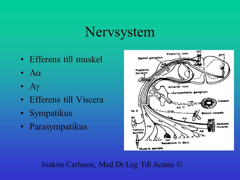 Nervsystem Efferens till muskel A  A  Efferens till Viscera Sympatikus Parasympatikus Joakim Carleson, Med Dr Leg Tdl Acasia ©