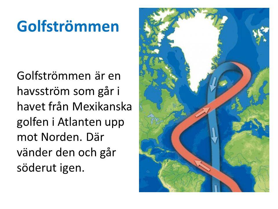 Golfströmmen Golfströmmen är en havsström som går i havet från Mexikanska golfen i Atlanten upp mot Norden. Där vänder den och går söderut igen.