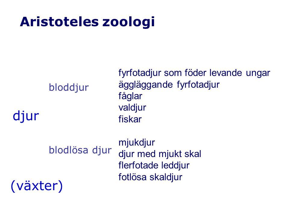 Aristotelisk definition närmaste högre klass och särskiljande kännetecken primat = däggdjur med griphänder