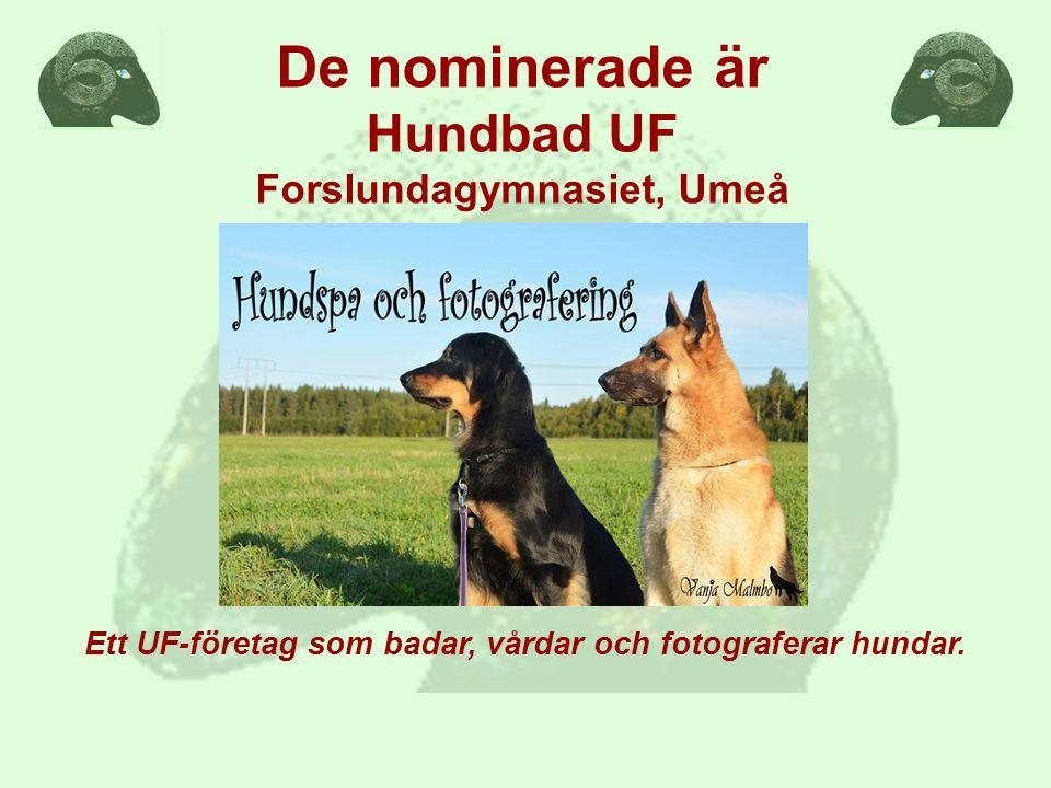 Ett UF-företag som badar, vårdar och fotograferar hundar.