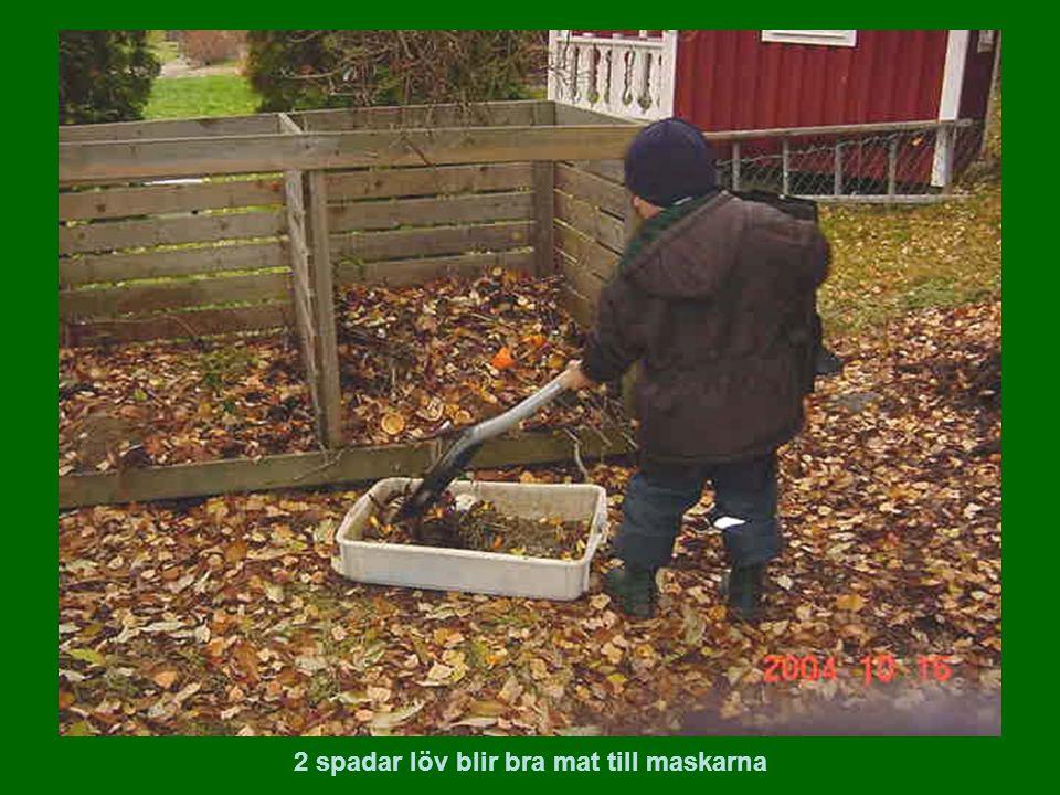 2 spadar löv blir bra mat till maskarna